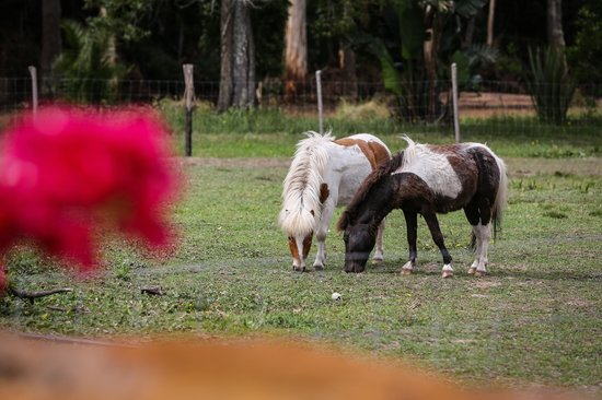 Coral Tree Cottages: Miniature horses