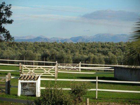 Hacienda Horses: View across the fields