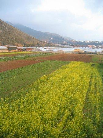 Agriturismo Villa Prato: dalla nostra camera