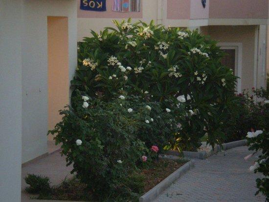 Evdokia Apartments: garden