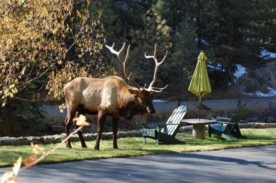 Highland Haven Creekside Inn : Elk roaming the property