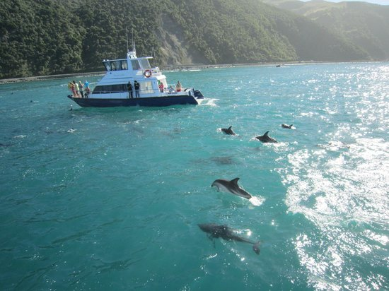 Dolphin Encounter: In the middle of the pod