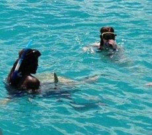 Shasa Catamaran Cruises: swimming with the turtles