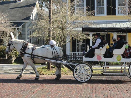 Downtown Wilmington: A Peculiar Horse