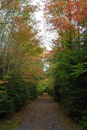 Balsam Woods Campground: Walking Trail