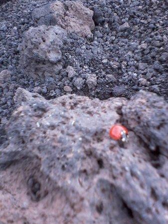 Funivia dell'Etna: ...la coccinella e il vulcano...