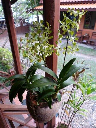 Auberge Sala Inpeng (Mekong Riverside Inn): délicate orchidée de notre balcon