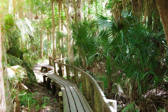Highlands Hammock State Park: We loved this boardwalk