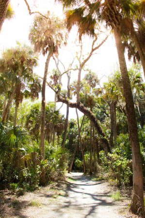 Highlands Hammock State Park: Amazing trees