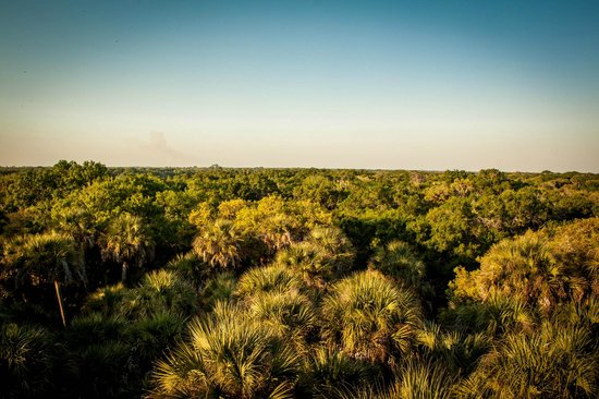 Myakka Canopy Walkway: The view from a top the tower