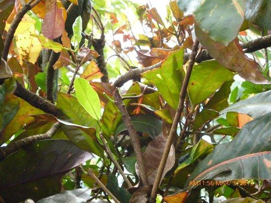 Hotel Tropical Garden : parte del jardin