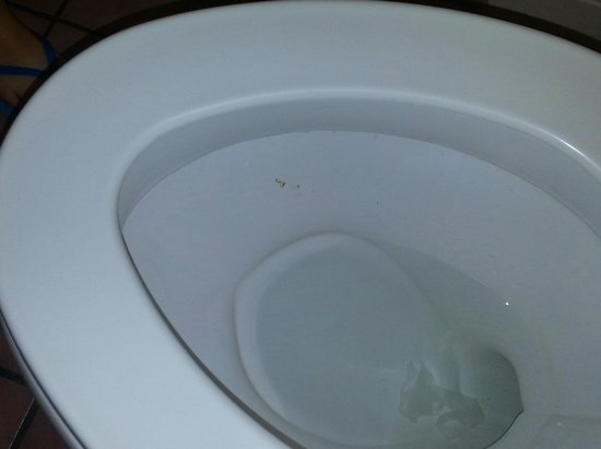 Country Cascades Waterpark Resort: dirty toilet