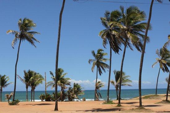 Stella Maris beach : entrada a la playa y sus palmeras