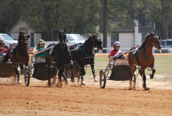 Pinehurst Harness Track: Matinee Day  April 2013, their first lifetime race
