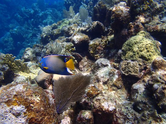 Mayoka Boutique Hotel: Queen Angel Fish