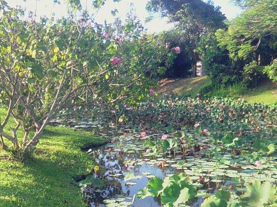 Lisu Lodge: The Garden