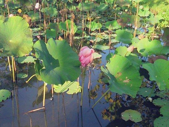 Lisu Lodge: The Pond