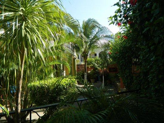 Aventura Mexicana: foliage