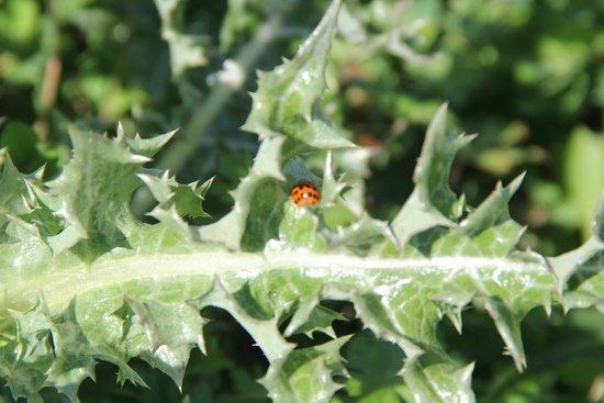 Paynes Prairie: Lady Bug