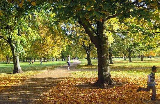 Hilton London Hyde Park: autumn gold