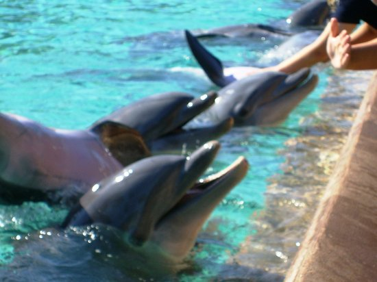 Rosen Inn International: Sea World