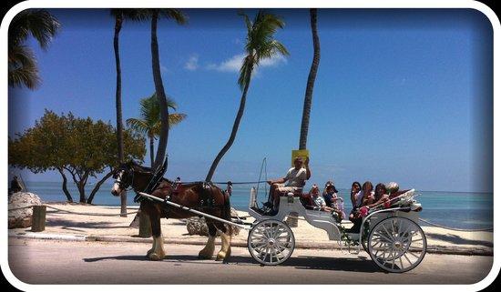 Island horse drawn carriages Islamorada fl: getlstd_property_photo