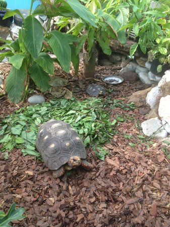 The Azure Hotel: Tortoise in the courtyard