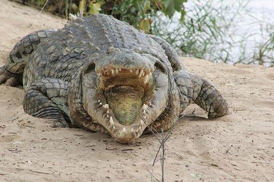 Mimi na Wewe...in Africa!: crocodile