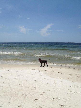 Tiki Palms Inn : Beautiful, dog friendly beach, ten minutes away!