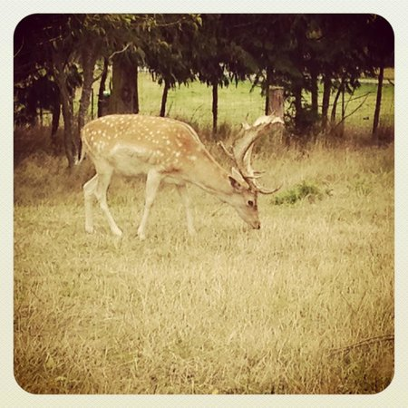 Glendeer Lodge: They have pet deer! :)