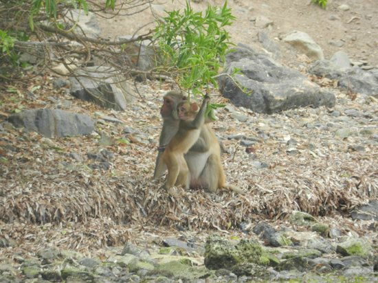Barefoot Travelers Rooms: Mama and her baby monkey