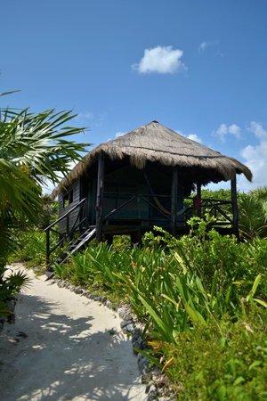 Cesiak Centro Ecologico Sian Ka'an : Garden view tent cabin