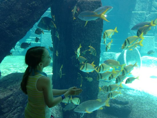 Atlantis, Beach Tower, Autograph Collection: Aquarium in Royal Towers lobby