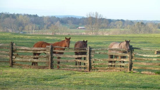 Seventy-four Ranch: horses ready for the day