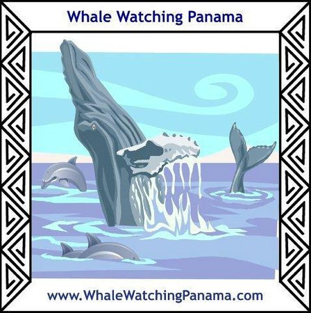 ‪‪Whale Watching Panama‬: Whale Watching Panama Logo‬