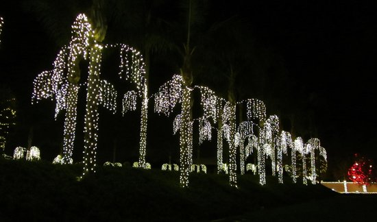 San Diego Mormon Temple: palms decorated for Christmas