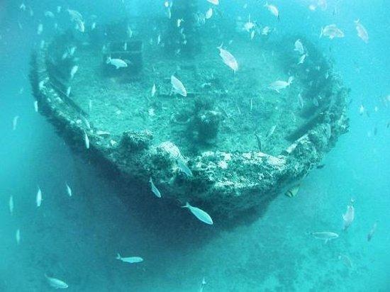 Calypso Dive Charters: Capt Tony Wreck