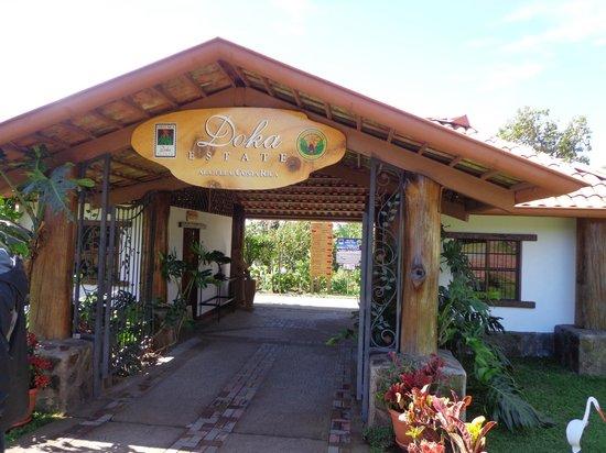 Doka Estate Coffee Tour: llegada
