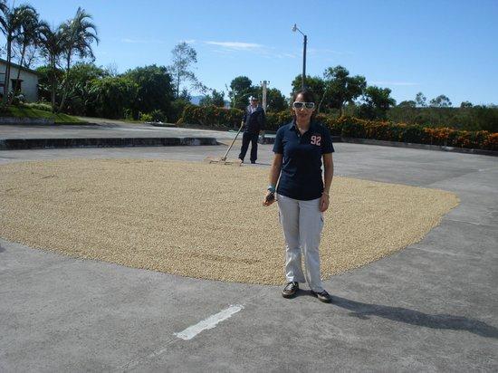 Doka Estate Coffee Tour: secado