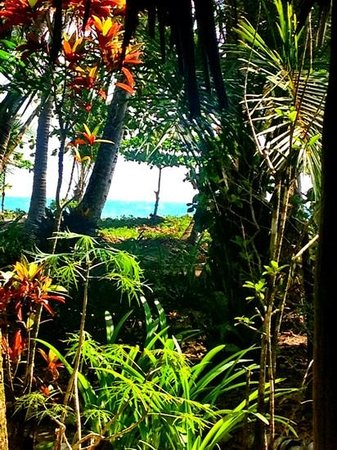 Cabinas Los Cocos: view from our porch