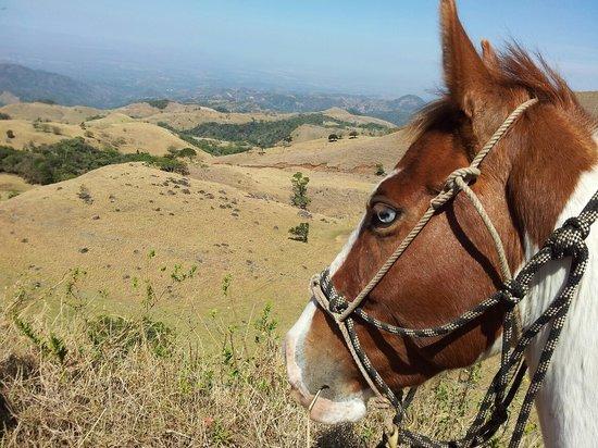 Sabine's Smiling Horses: Smiling Horses in Costa Rica