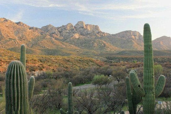 Catalina State Park Az Picture Of Catalina State Park