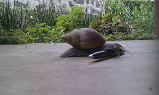 Baraka Lodge: They have big snails in Africa (not on the menu)