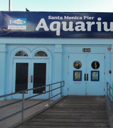 Santa Monica Pier Aquarium: Aquariu