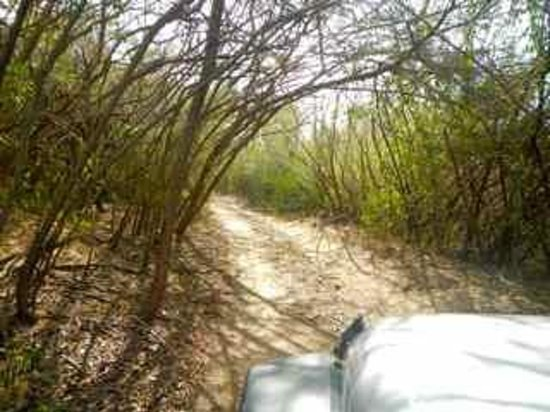 """Vieques National Wildlife Refuge: """"Off-Road"""" in Vieques Wildlife Refuge"""