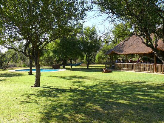 Dinonyane Bush Lodge: Pool and lapa