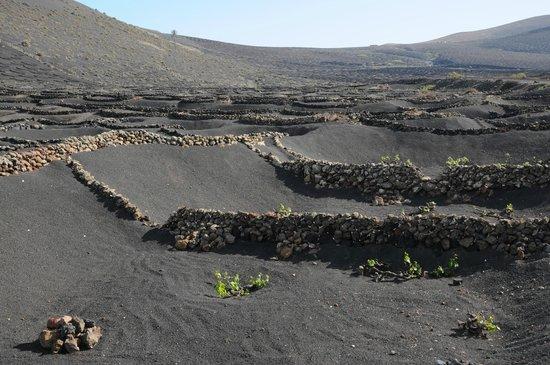 El Chupadero: Protection walls of lava stones