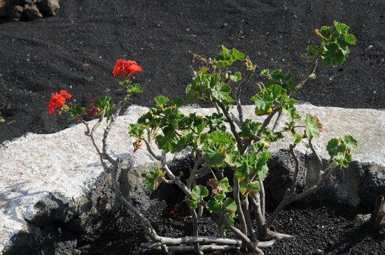 El Chupadero: The beauty in the black lava sand