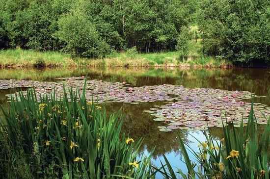 Haute vienne lac de saint pardoux p che baignade camping for Haute vienne