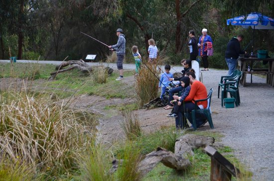 Rhyll Trout and Bush Tucker Farm: Great family fun - with patience!
